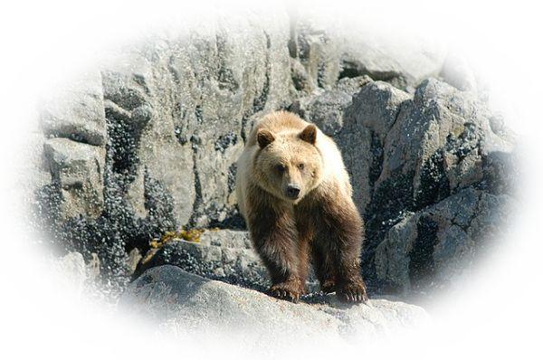 熊と戦う夢(熊を倒す夢、熊を退治する夢)