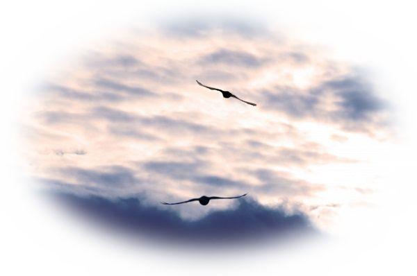 空高く飛ぶ鷹を見る夢