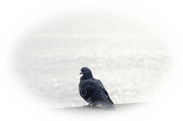 鳩の夢占い