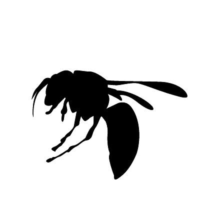 女王蜂を見る夢