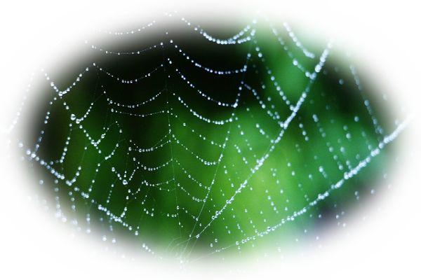 夢占い蜘蛛(クモ)の夢の意味33選!良い夢が少なすぎ!?