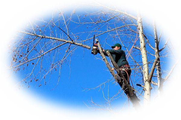 山で木を切る夢