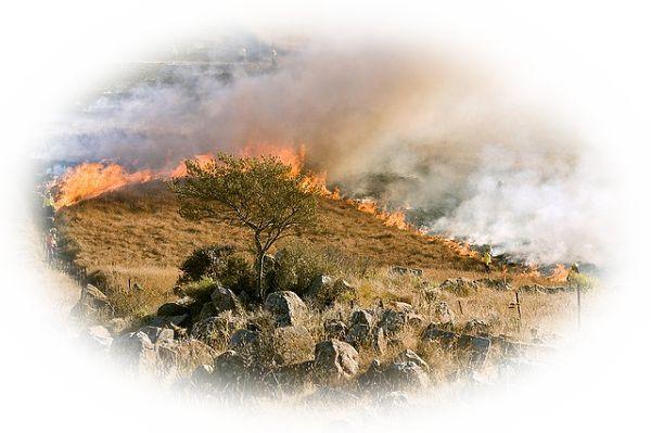 山にいて山火事が起こる夢