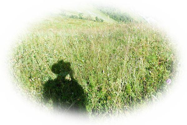 畑を買う夢(作物が植えてある畑を買う夢)