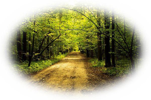 山道を散歩している夢