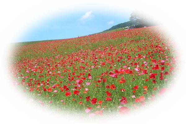 花に囲まれた公園の夢(公園に花を植える夢、公園で花を摘んでいる夢)