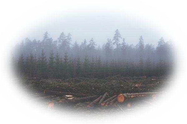 風が樹木を倒す夢