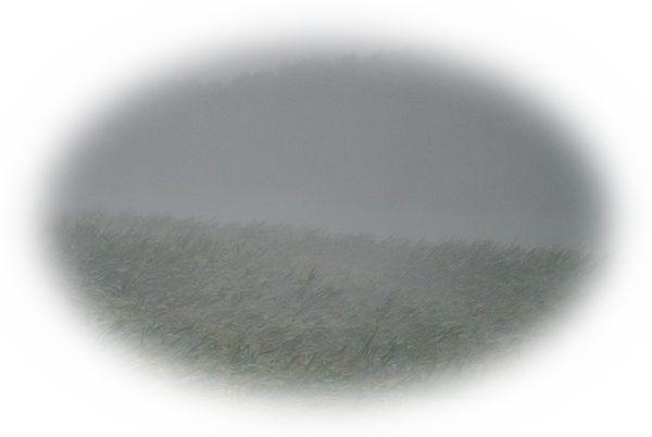 雨が降る中で田植えをしている夢