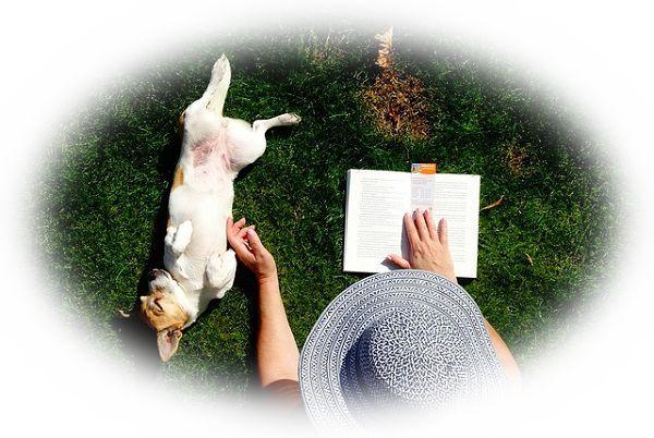 庭に出る夢(庭に出て読書をしている夢)