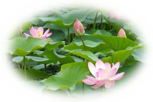 庭に綺麗な花が咲いている夢(庭の庭木に花が咲いている夢)