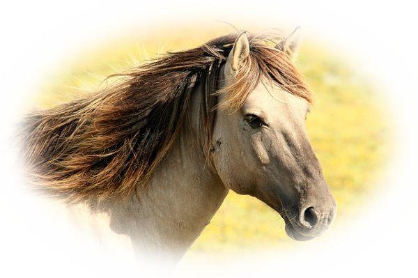 馬がしゃべる夢