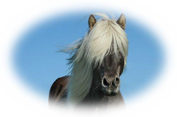 馬に噛まれる夢
