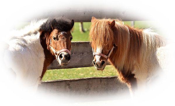 色が特徴的な馬を見る夢(白馬、黒馬、赤馬などを見る夢)