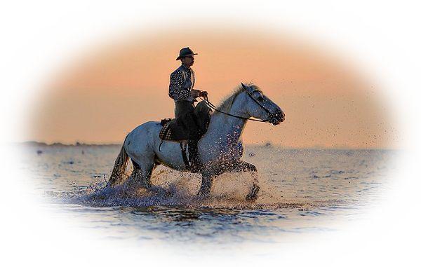 良い馬に乗る夢