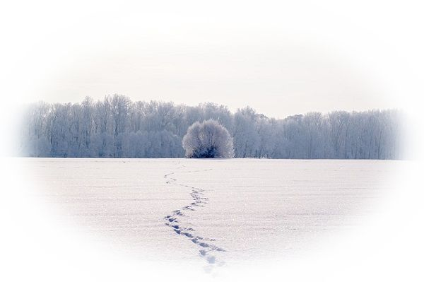 雪道に足跡がある夢(雪道に足跡が幾つもの方向にある夢)