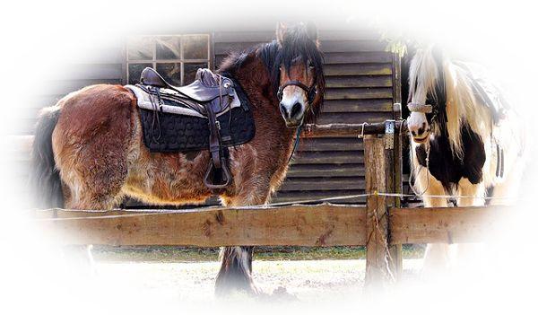 馬をつなぐ夢