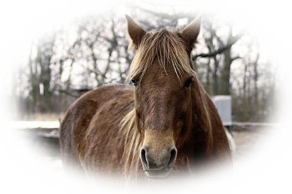 夢占い馬の夢の意味30選!女性が見たら馬は男性を表す?