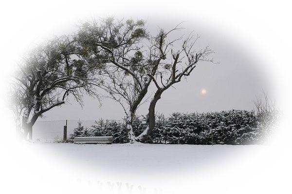 庭先に雪が積もる夢(家の外から庭先に積もる雪を見る夢)