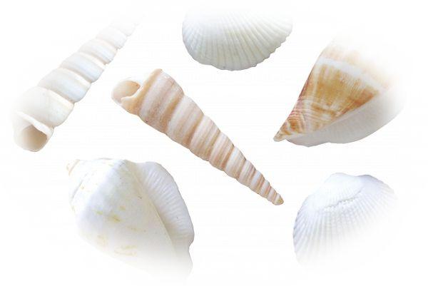 夢占い貝の夢の意味9選!閉じた貝は口は禍の元を表している?