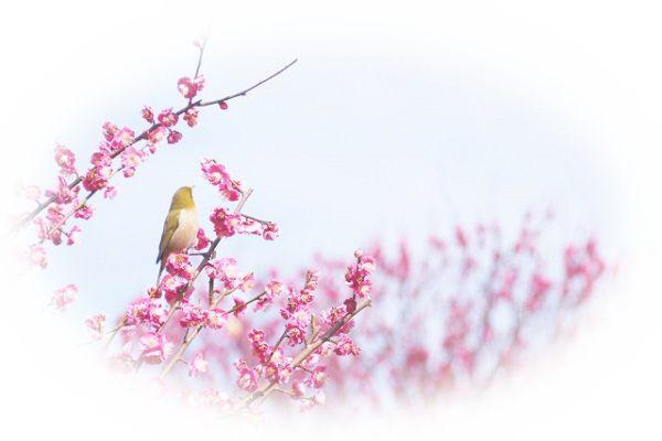 夢占い梅の夢の意味14選!これから運気が上がっていく予兆?